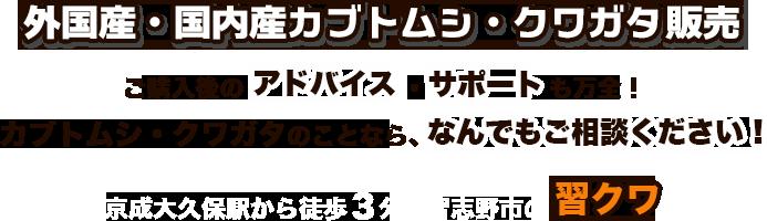 外国産・国内産カブトムシ・クワガタ販売